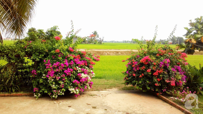 Chàng trai 9x biến mảnh đất trống thành khu vườn toàn hoa rực rỡ chỉ sau 2 tháng thi công