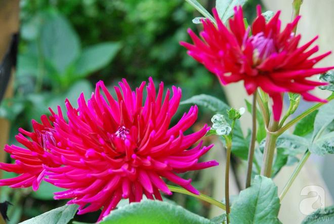 Khu vườn hoa nở suốt bốn mùa đẹp như trong mơ của đạo diễn Nguyễn Hải Anh